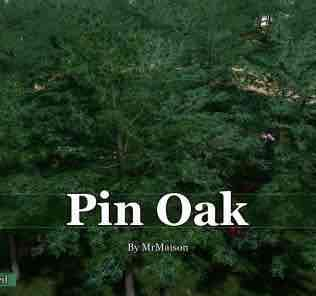 Мод Pin Oak для Cities Skylines